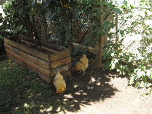 hens_compost