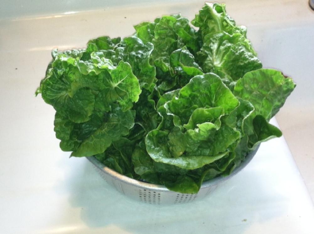 fresh manoa lettuce